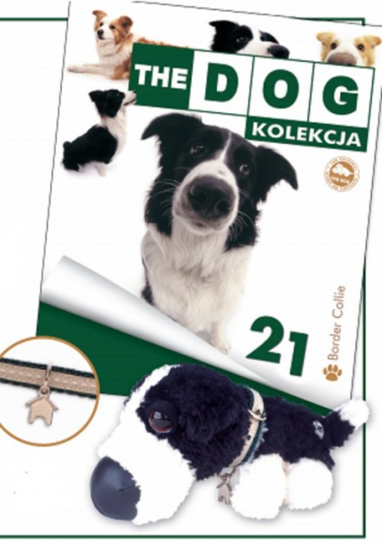 Dog Kolekcja 21 Border Collie