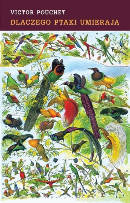 Dlaczego ptaki umierają - Victor Pouchet | okładka